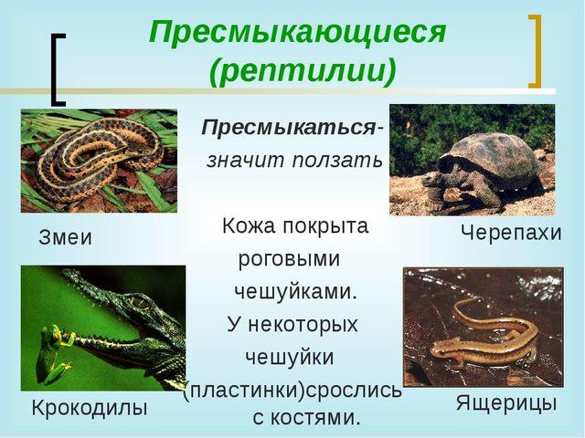 Пресмыкающиеся (рептилии) Пресмыкаться- значит ползать Кожа покрыта роговыми...