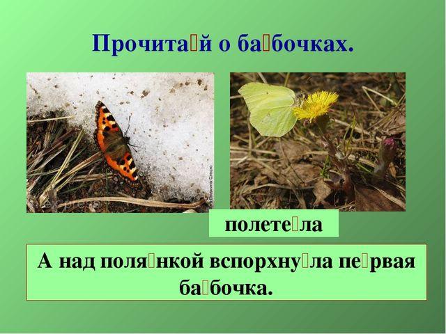 Прочита́й о ба́бочках. А над поля́нкой вспорхну́ла пе́рвая ба́бочка. полете́ла