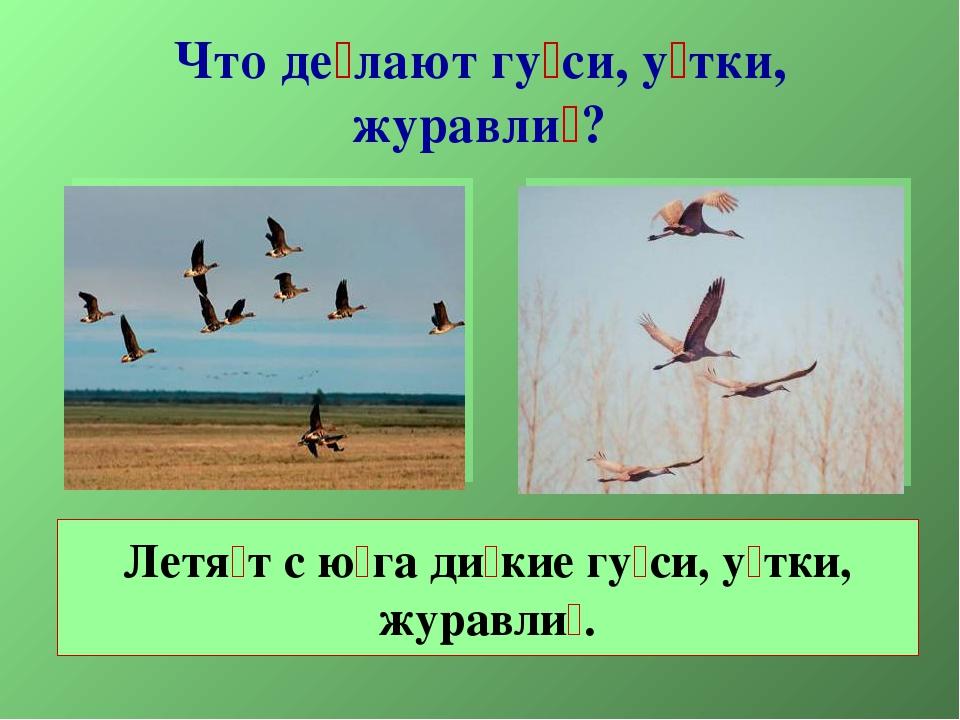 Что де́лают гу́си, у́тки, журавли́? Летя́т с ю́га ди́кие гу́си, у́тки, журавл...