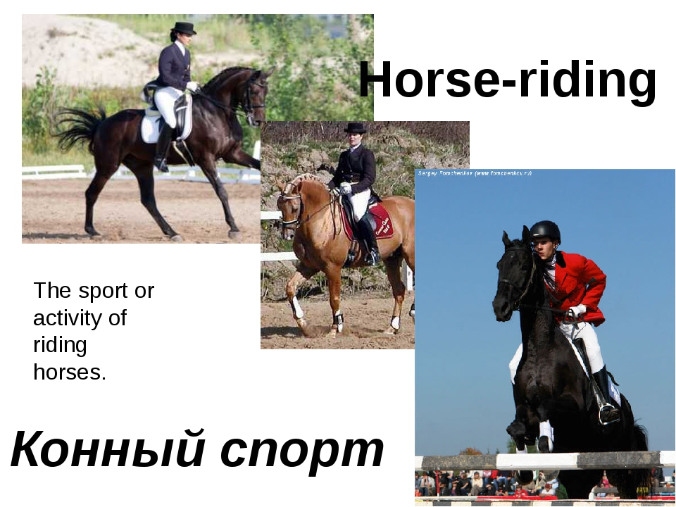 Horse-riding Конный спорт The sport or activity of riding horses.