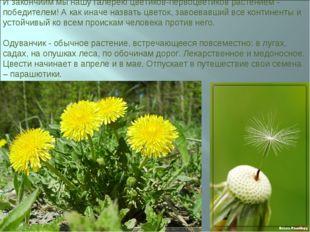 И закончиим мы нашу галерею цветиков-первоцветиков растением - победителем! А