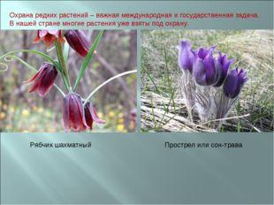 Охрана редких растений – важная международная и государственная задача. В наш