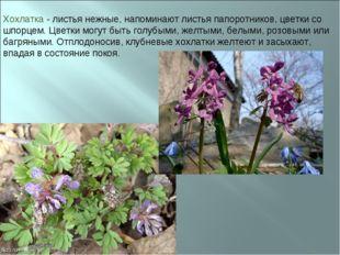 Хохлатка - листья нежные, напоминают листья папоротников, цветки со шпорцем.