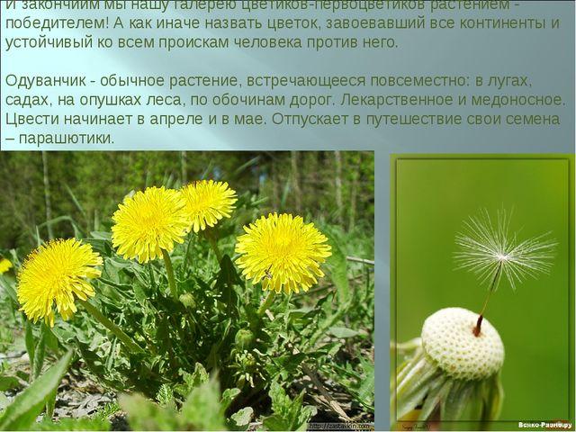 И закончиим мы нашу галерею цветиков-первоцветиков растением - победителем! А...