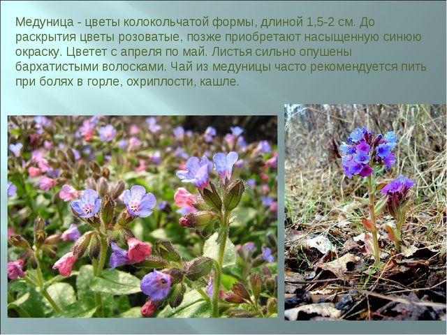 Медуница - цветы колокольчатой формы, длиной 1,5-2 см. До раскрытия цветы роз...