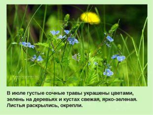 В июле густые сочные травы украшены цветами, зелень на деревьях и кустах свеж