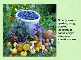В лесу много грибов, ягод, орехов. Поэтому и зовут август в народе «хлебосоло