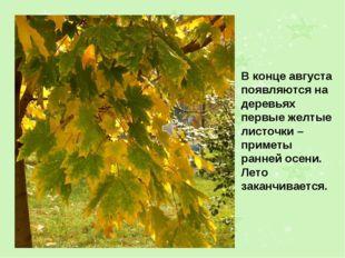 В конце августа появляются на деревьях первые желтые листочки – приметы ранне