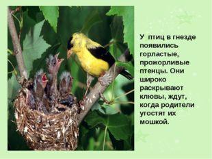 У птиц в гнезде появились горластые, прожорливые птенцы. Они широко раскрываю
