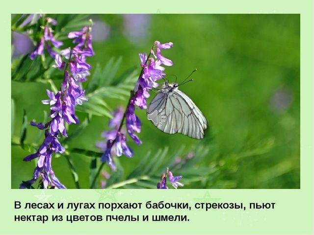 В лесах и лугах порхают бабочки, стрекозы, пьют нектар из цветов пчелы и шмели.