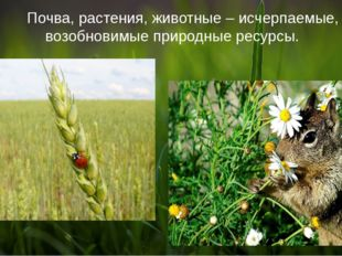 Почва, растения, животные – исчерпаемые, возобновимые природные ресурсы.