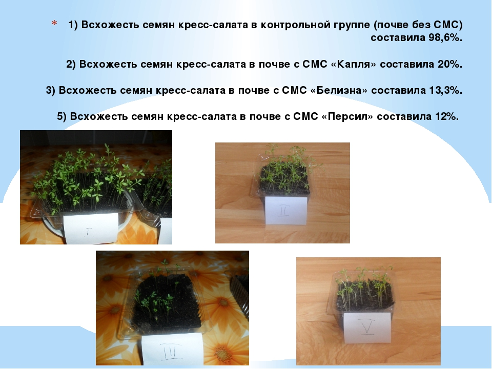 1) Всхожесть семян кресс-салата в контрольной группе (почве без СМС) составил...