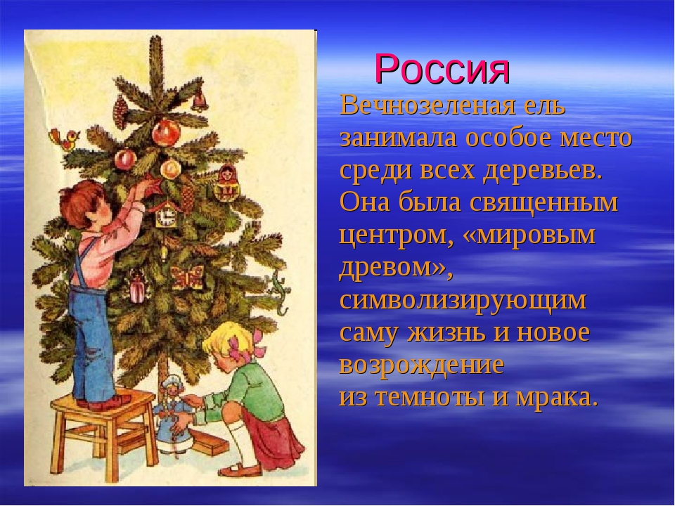 Россия Вечнозеленая ель занимала особое место среди всех деревьев. Она была с...