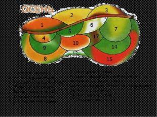 1. Гелениум осенний 2. Рудбекия рассечённая 3. Подсолнечник однолетний 4. Тык