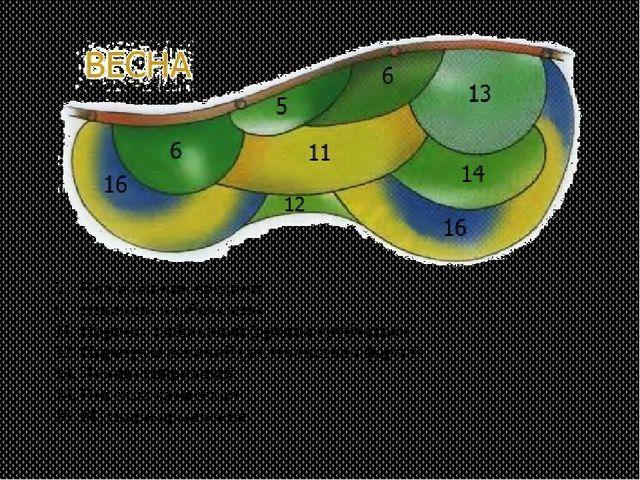 5. Колокольчик средний 6. Нивяник наибольший 11. Нарцисс гибридный (группа тр...
