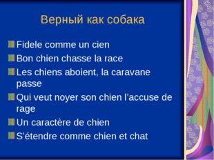 Верный как собака Fidele comme un cien Bon chien chasse la race Les chiens ab