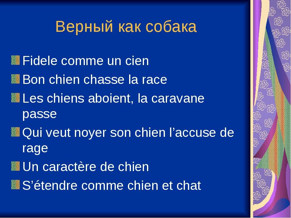 Верный как собака Fidele comme un cien Bon chien chasse la race Les chiens ab...