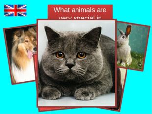 What animals are very special in Britain?