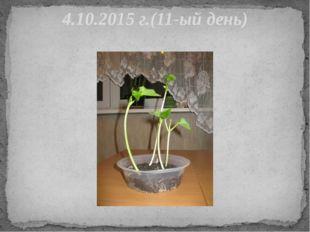 4.10.2015 г.(11-ый день)