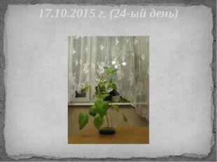 17.10.2015 г. (24-ый день)