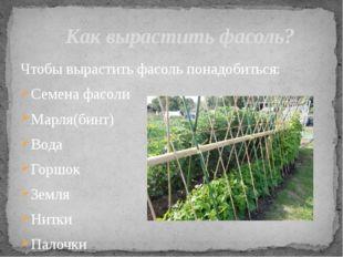 Чтобы вырастить фасоль понадобиться: Семена фасоли Марля(бинт) Вода Горшок Зе