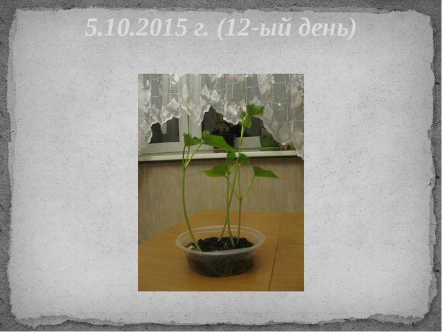 5.10.2015 г. (12-ый день)