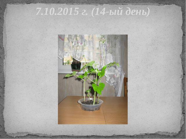 7.10.2015 г. (14-ый день)