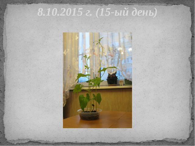 8.10.2015 г. (15-ый день)