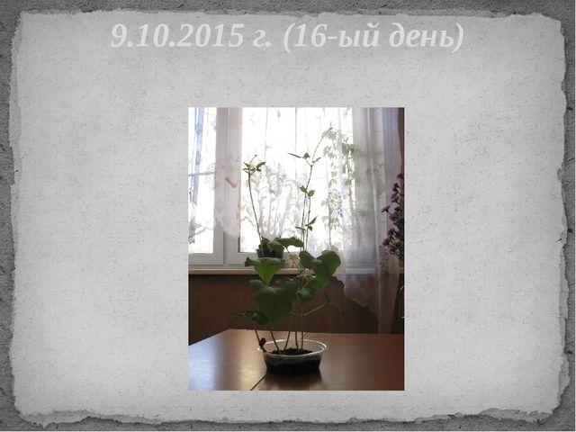 9.10.2015 г. (16-ый день)
