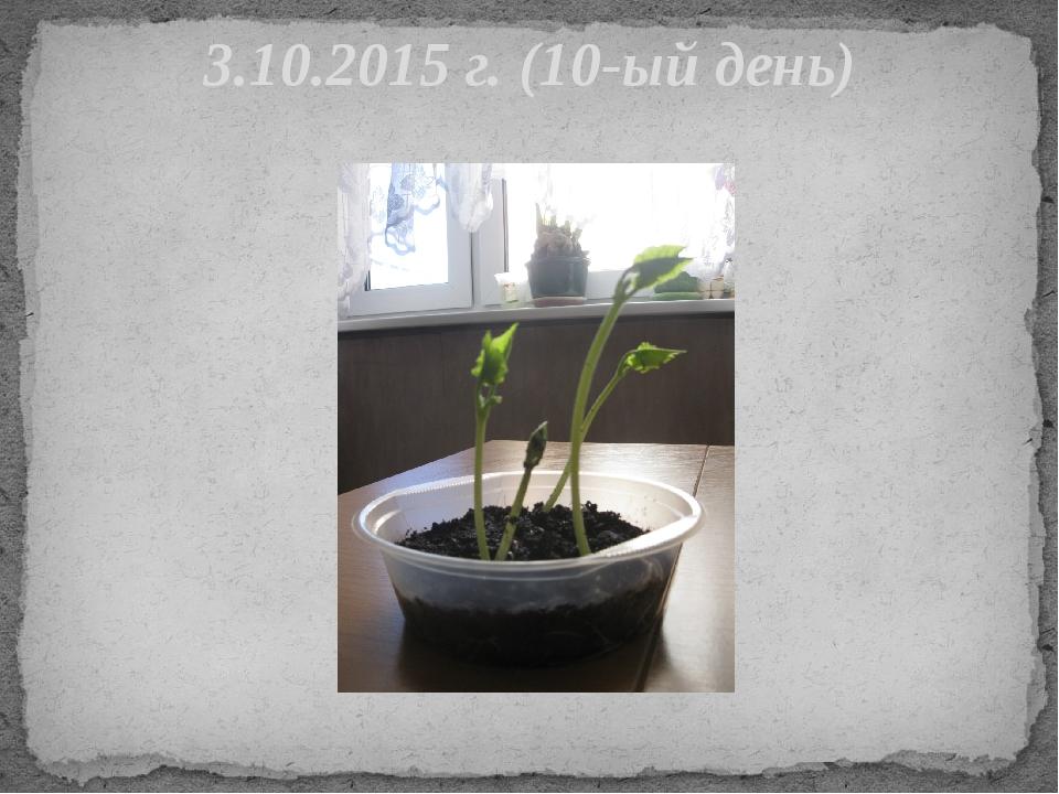 3.10.2015 г. (10-ый день)
