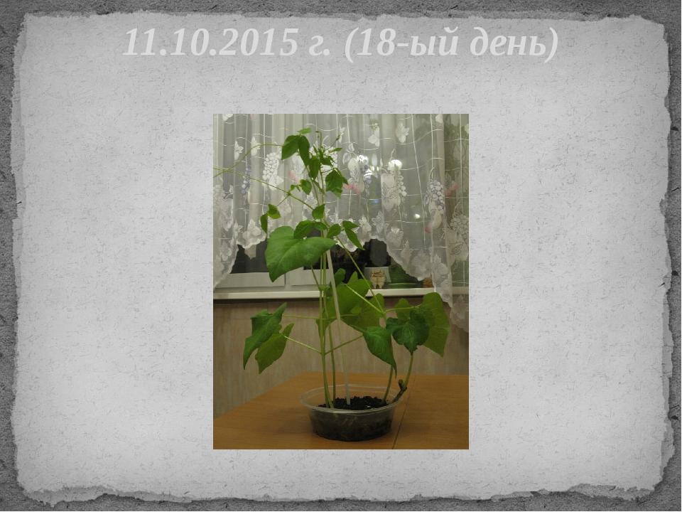 11.10.2015 г. (18-ый день)