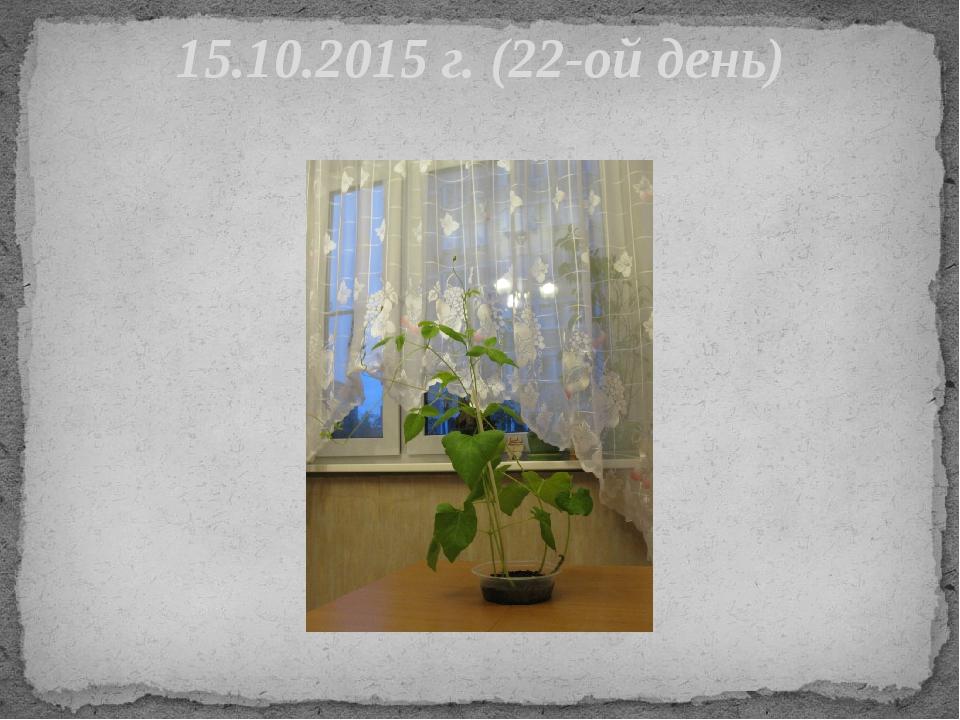 15.10.2015 г. (22-ой день)