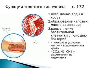 1.всасывание воды в кровь 2.образование каловых масс и дефекация 3.расщеплени