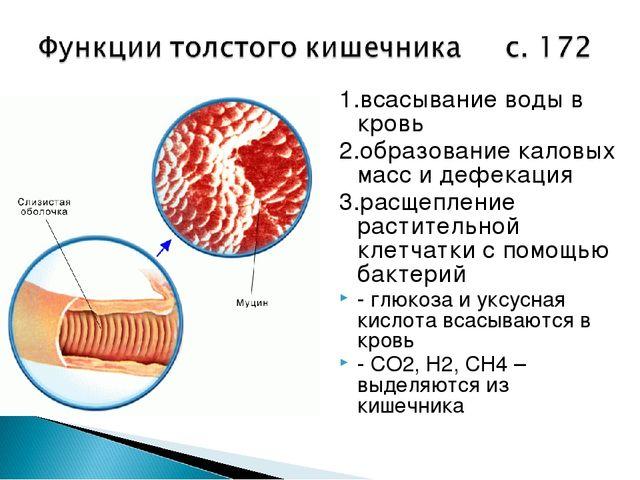 1.всасывание воды в кровь 2.образование каловых масс и дефекация 3.расщеплени...