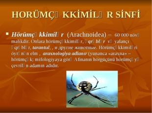 HORÜMÇƏKKİMİLƏR SİNFİ Hörümçəkkimilər (Arachnoidea) – 60000 növə malikdir. O