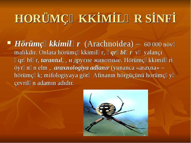 HORÜMÇƏKKİMİLƏR SİNFİ Hörümçəkkimilər (Arachnoidea) – 60000 növə malikdir. O...