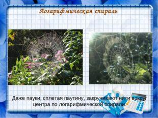 Логарифмическая спираль Даже пауки, сплетая паутину, закручивают нити вокруг