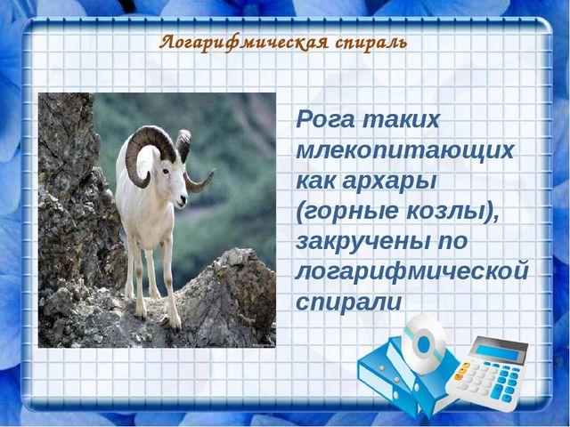 Логарифмическая спираль Рога таких млекопитающих как архары (горные козлы), з...