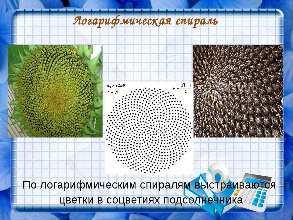 Логарифмическая спираль По логарифмическим спиралям выстраиваются цветки в со...
