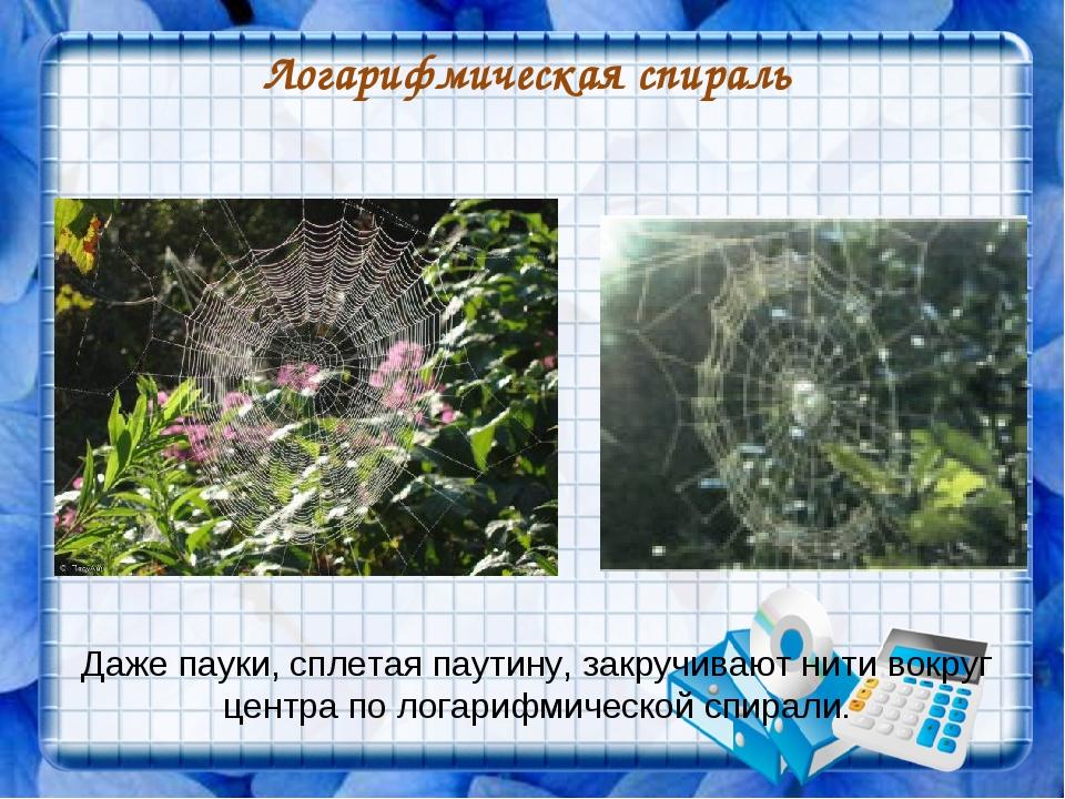 Логарифмическая спираль Даже пауки, сплетая паутину, закручивают нити вокруг...