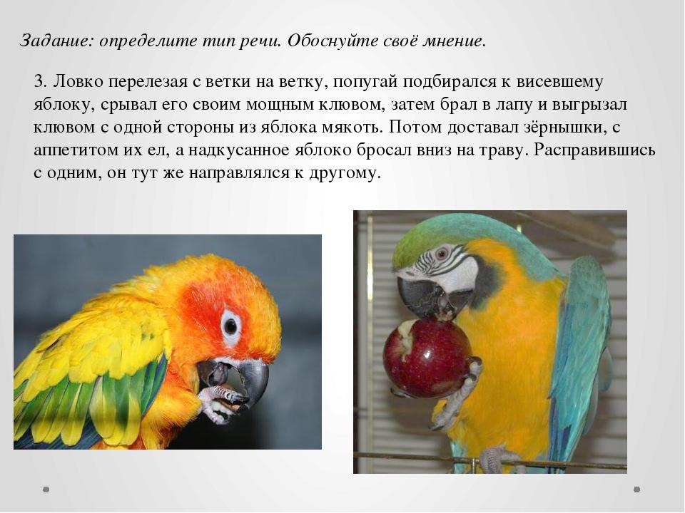 3. Ловко перелезая с ветки на ветку, попугай подбирался к висевшему яблоку, с...