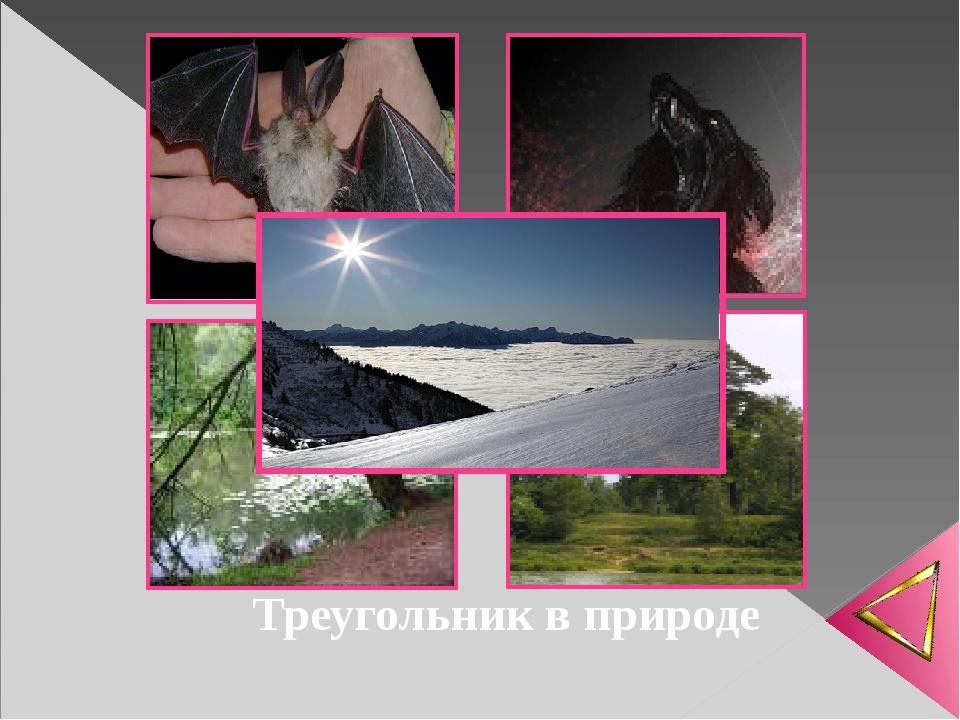 Треугольник в природе