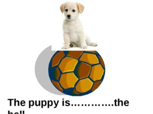 The puppy is………….the ball on