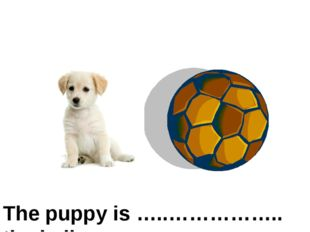 The puppy is …..…………….. the ball on the left of