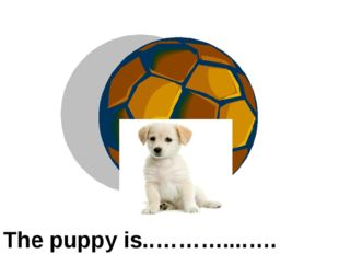 in front of The puppy is..………....….…..the ball