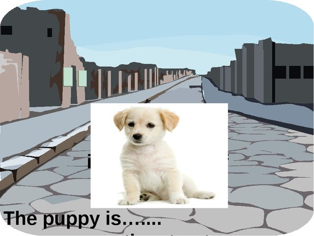 The puppy is…....……………….the street. in the middle of