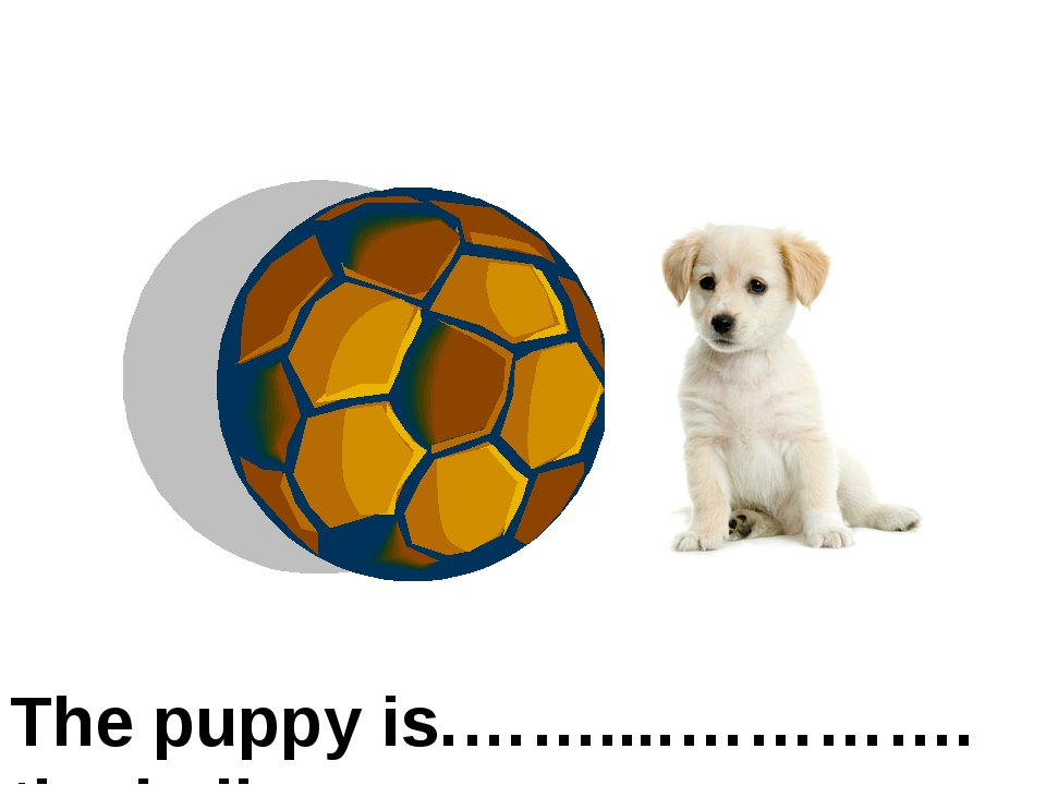 on the right of The puppy is.……....…………. the ball
