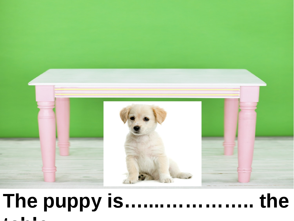 under The puppy is…....………….. the table. under