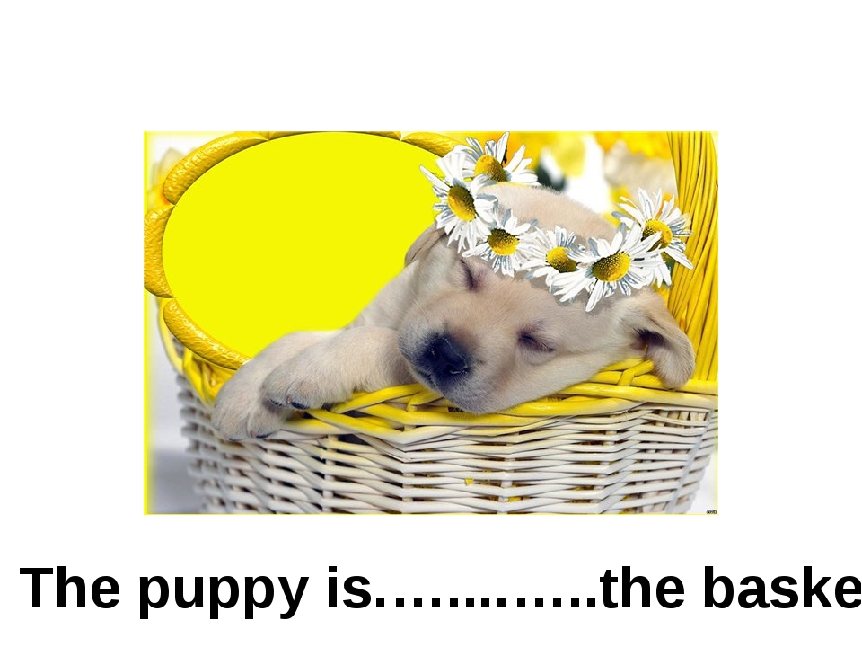in The puppy is.…....…..the basket.