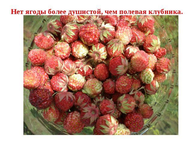Нет ягоды более душистой, чем полевая клубника.